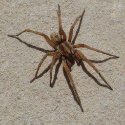 Уничтожение пауков в Югорске